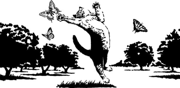 Cat&Butterfly