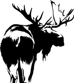 Moose illustration